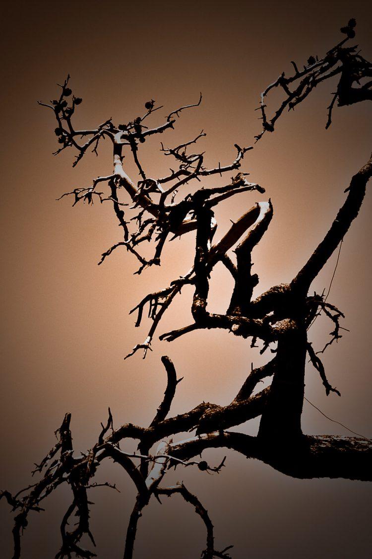 Photographie d'art - L'arbre par Idan Wizen